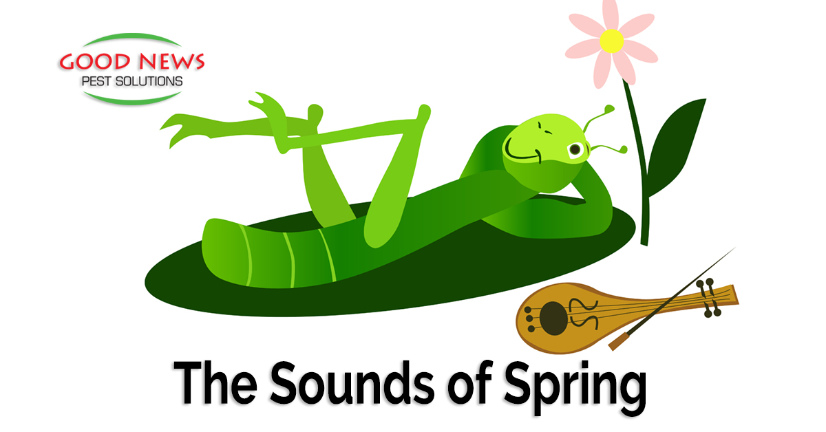 The Sounds of Spring