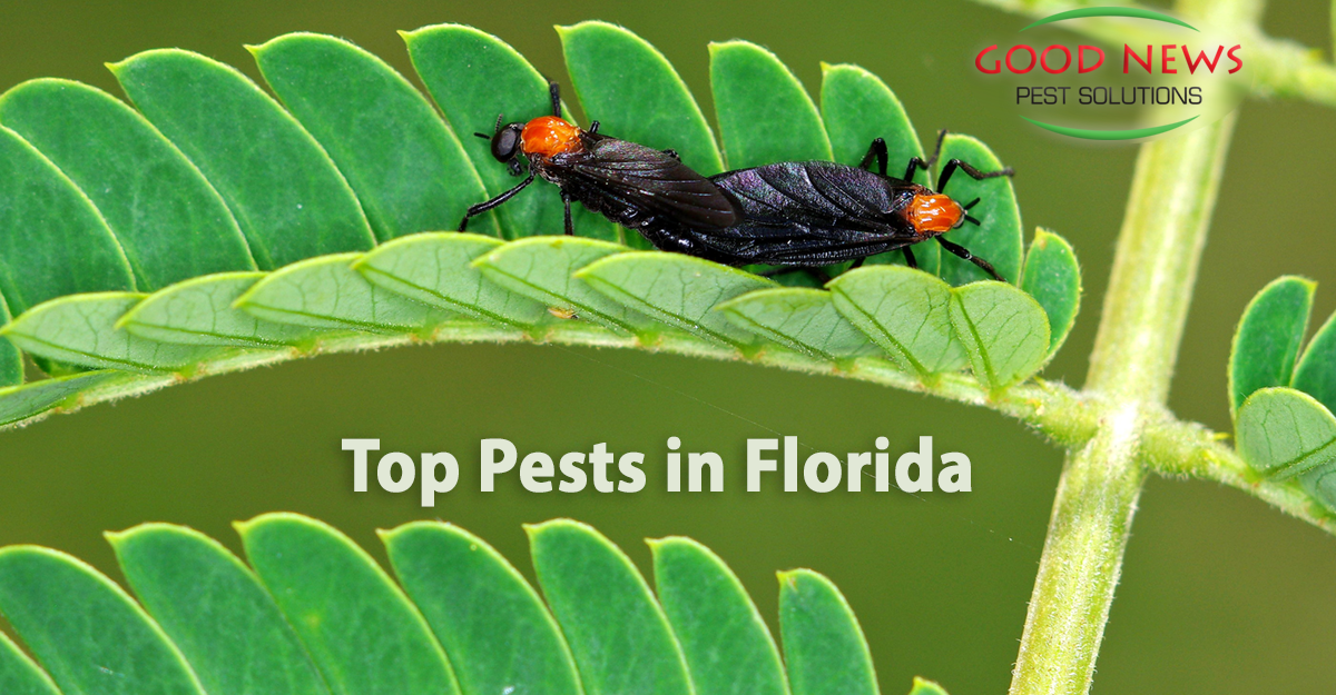 Top Pests in Florida